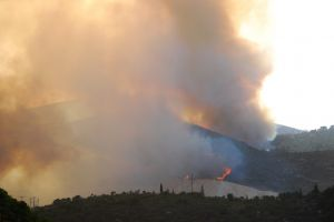 Forest Fires Cost Millions in Insured Losses