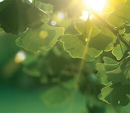 green assure aviva insurance